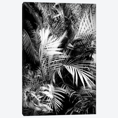 Wild Palm Tree Canvas Print #DFU68} by Dorit Fuhg Canvas Wall Art