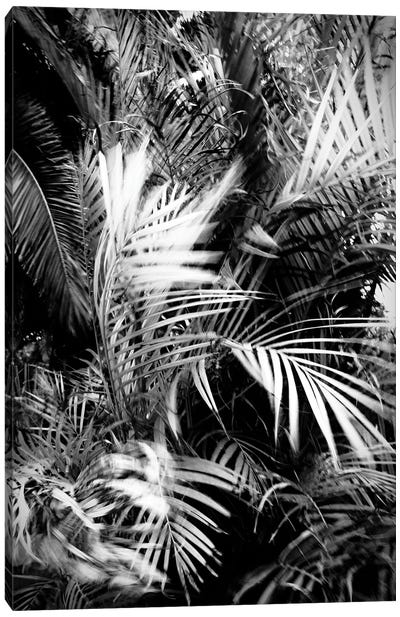 Wild Palm Tree Canvas Art Print