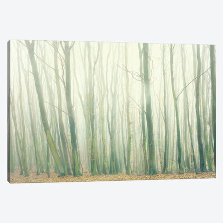 Fog In The Forest Canvas Print #DFU72} by Dorit Fuhg Art Print