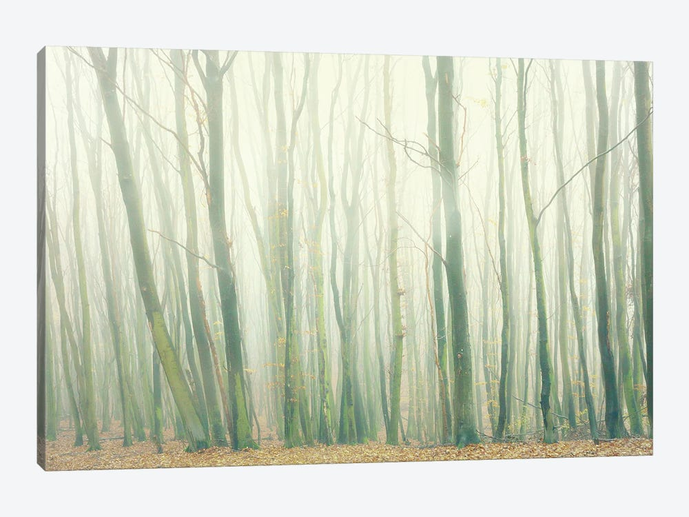 Fog In The Forest by Dorit Fuhg 1-piece Canvas Print