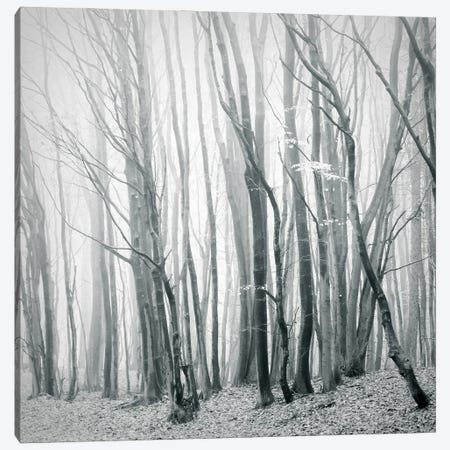 Fog In The Forest II Canvas Print #DFU76} by Dorit Fuhg Canvas Wall Art
