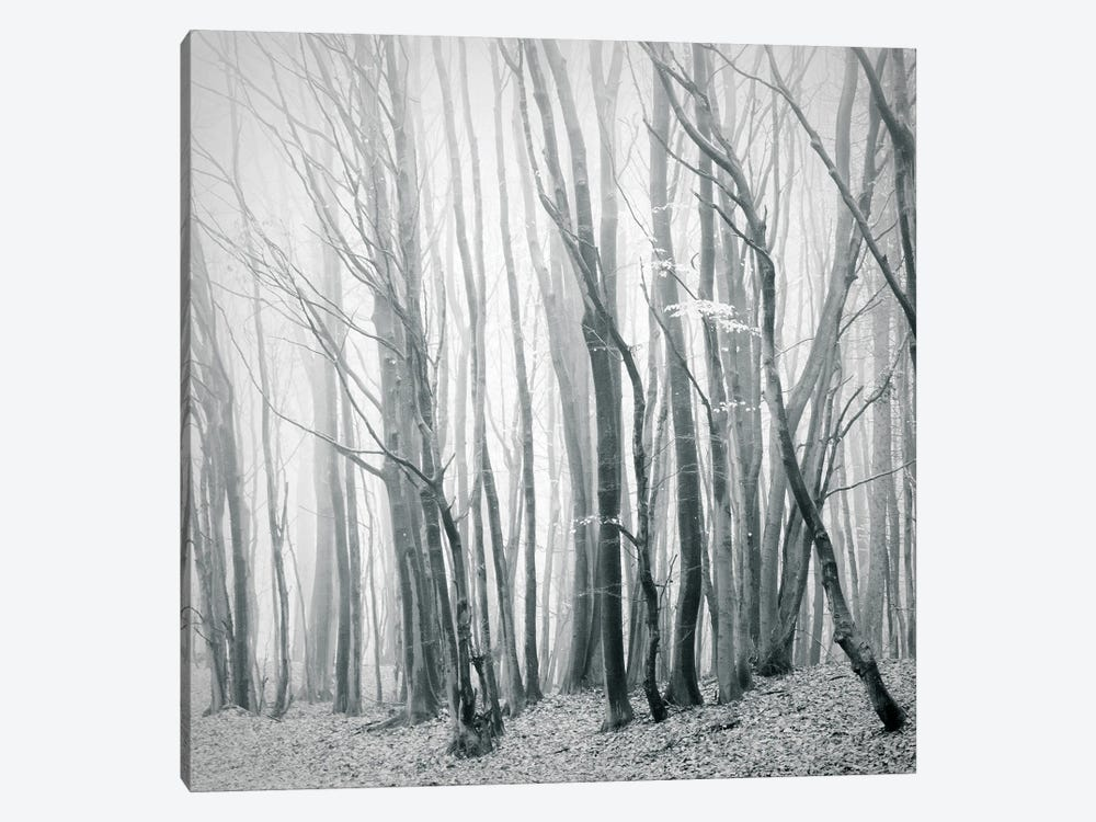 Fog In The Forest II by Dorit Fuhg 1-piece Canvas Print