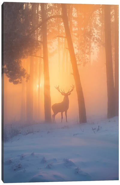 Nature Miracle Canvas Art Print