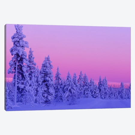 Magical Winter Sunset, Saariselka, Lapland, Finland Canvas Print #DGI1} by Daisy Gilardini Canvas Art