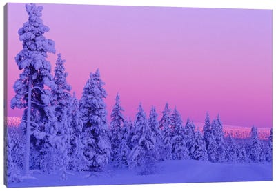 Magical Winter Sunset, Saariselka, Lapland, Finland Canvas Art Print