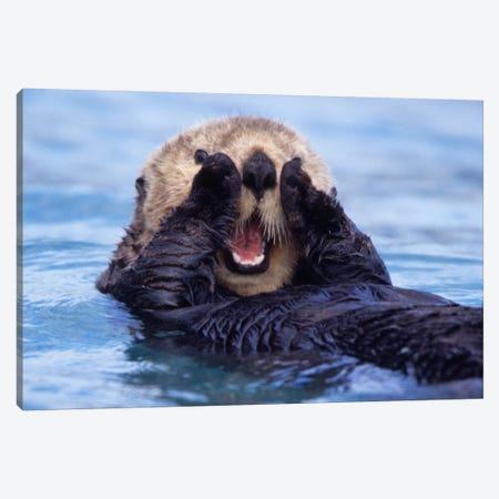 A Jovial Sea Otter, Alaska, USA Canvas Print #DGI2} by Daisy Gilardini Canvas Wall Art