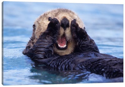 A Jovial Sea Otter, Alaska, USA Canvas Art Print
