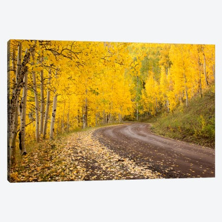 Autumn Landscape, Owl Creek Pass, Uncompahgre National Forest, Colorado, USA Canvas Print #DGR3} by Don Grall Canvas Art