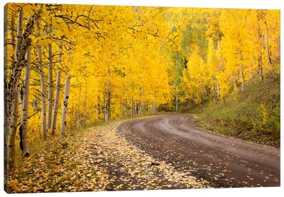 Autumn Landscape, Owl Creek Pass, Uncompahgre National Forest, Colorado, USA Canvas Art Print