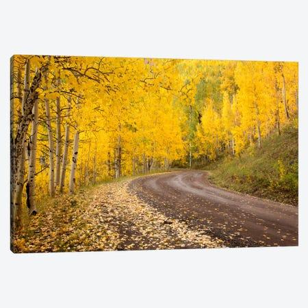 Autumn Landscape, Owl Creek Pass, Uncompahgre National Forest, Colorado, USA Canvas Print #DGR3} by Don Grall Canvas Art