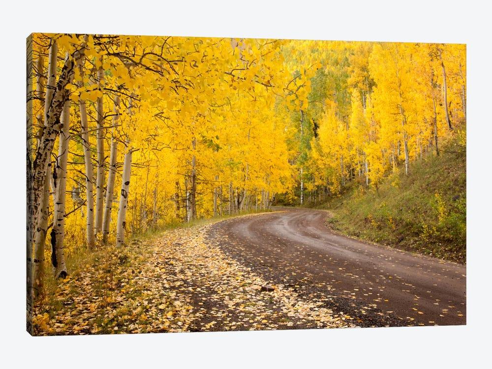 Autumn Landscape, Owl Creek Pass, Uncompahgre National Forest, Colorado, USA by Don Grall 1-piece Art Print