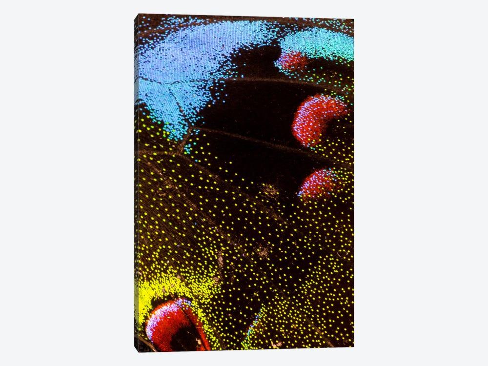 Butterfly Wing Macro-Photography III by Darrell Gulin 1-piece Art Print