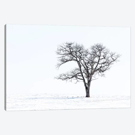 Lone tree in field of snow, Hokkaido, Japan. Canvas Print #DGU119} by Darrell Gulin Canvas Wall Art