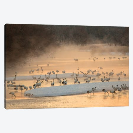 Morning first light and steam coming off of river with resting Red Crowned Cranes Canvas Print #DGU120} by Darrell Gulin Canvas Print