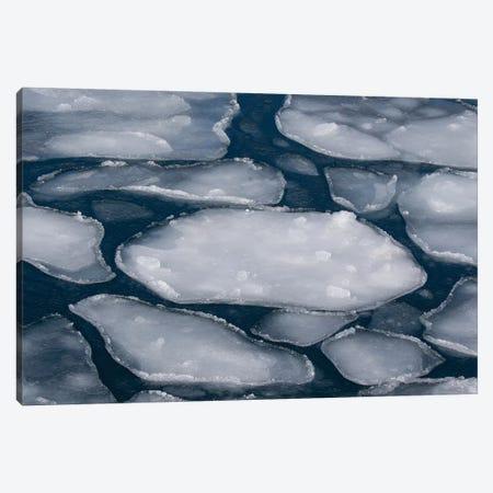 Pancake Ice along Shiretoko Peninsula. Winter in Northern Hokkaido, Japan Canvas Print #DGU121} by Darrell Gulin Canvas Print