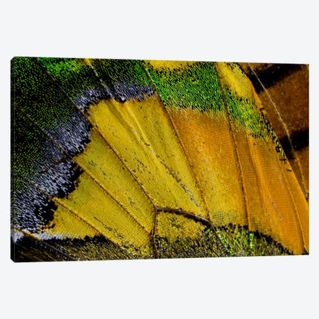 Butterfly Wing Macro-Photography V Canvas Print #DGU12} by Darrell Gulin Canvas Art