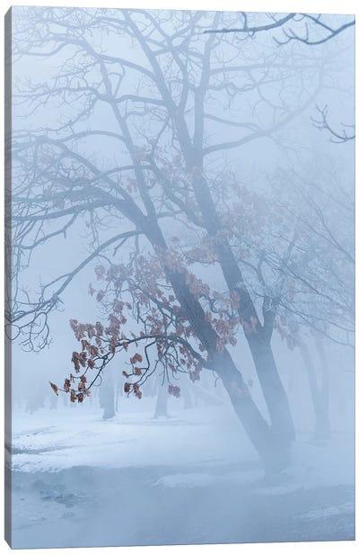 Trees along frozen Lake Kussharo. Winter snow with mist rising. Canvas Art Print