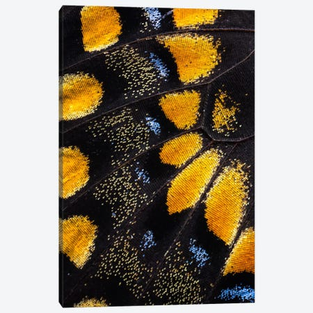 Butterfly Wing Macro-Photography VII Canvas Print #DGU14} by Darrell Gulin Art Print