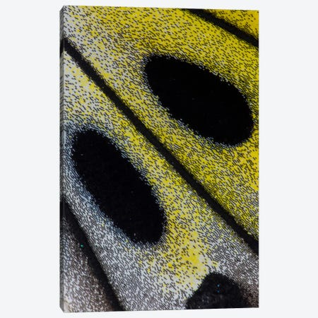 Butterfly Wing Macro-Photography X Canvas Print #DGU17} by Darrell Gulin Canvas Print