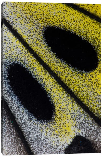 Butterfly Wing Macro-Photography X Canvas Print #DGU17