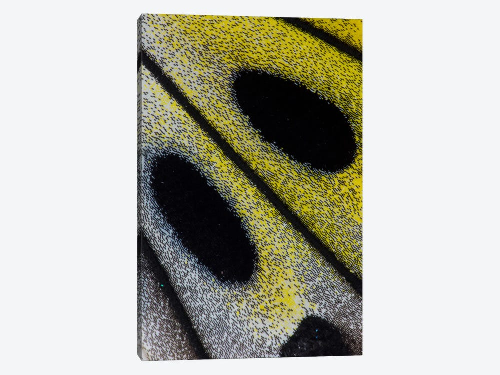 Butterfly Wing Macro-Photography X by Darrell Gulin 1-piece Canvas Artwork