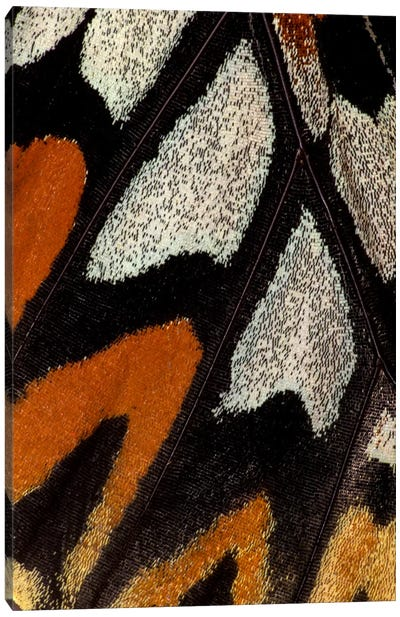 Butterfly Wing Macro-Photography XII Canvas Print #DGU19