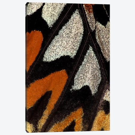 Butterfly Wing Macro-Photography XII Canvas Print #DGU19} by Darrell Gulin Canvas Artwork