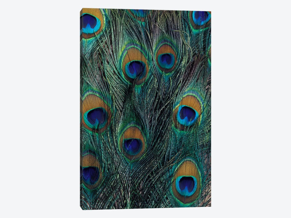 Peacock Feathers In Zoom 1-piece Canvas Artwork