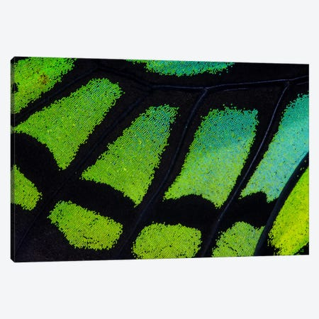 Butterfly Wing Macro-Photography XIII Canvas Print #DGU20} by Darrell Gulin Art Print