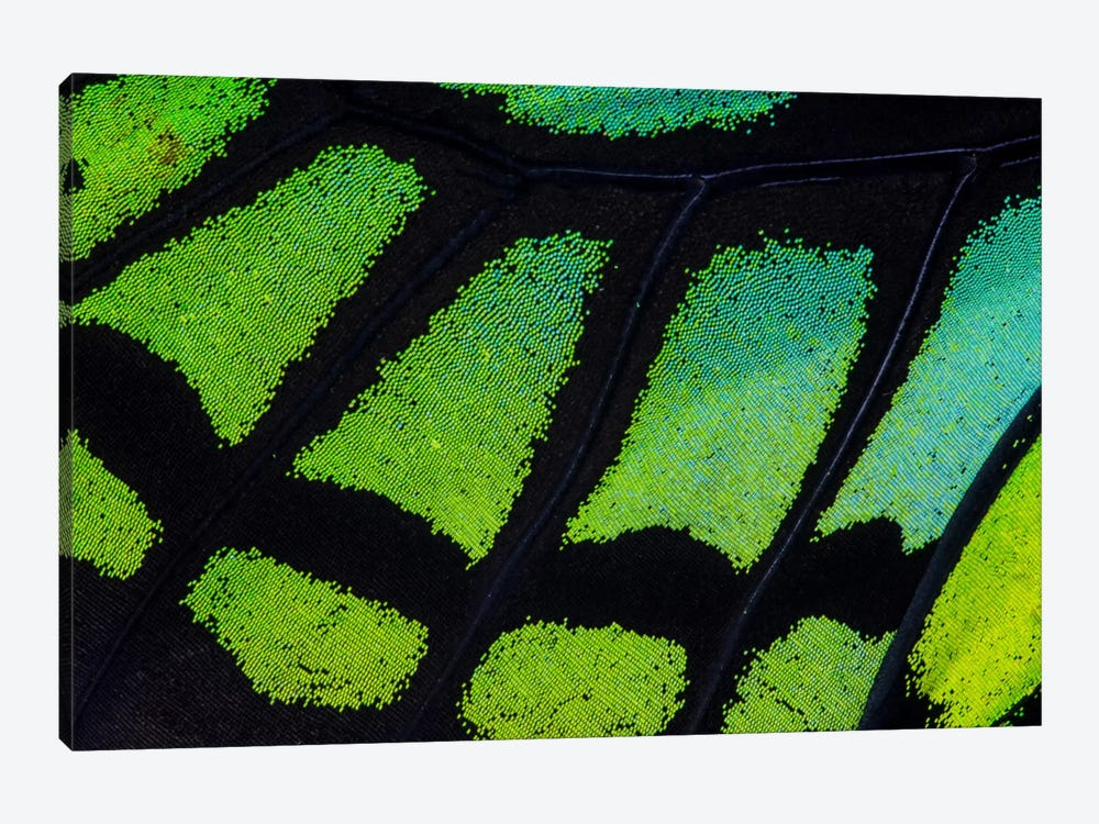 Butterfly Wing Macro-Photography XIII by Darrell Gulin 1-piece Canvas Artwork