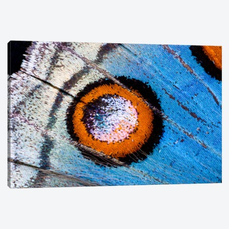 Butterfly Wing Macro-Photography XVIII Canvas Print #DGU25} by Darrell Gulin Canvas Art