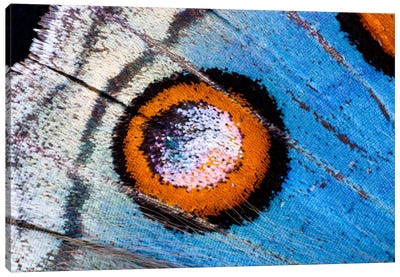 Butterfly Wing Macro-Photography XVIII Canvas Art Print