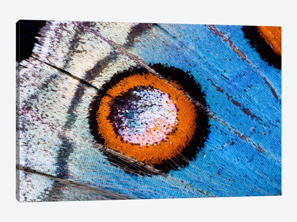 Butterfly Wing Macro-Photography XVIII by Darrell Gulin 1-piece Canvas Art Print