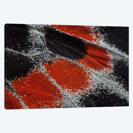 Butterfly Wing Macro-Photography XIX Canvas Print #DGU26} by Darrell Gulin Canvas Wall Art