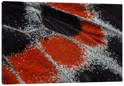 Butterfly Wing Macro-Photography XIX Canvas Art Print