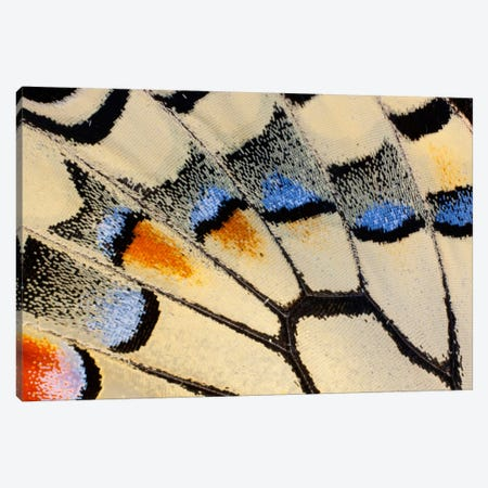 Butterfly Wing Macro-Photography XX Canvas Print #DGU27} by Darrell Gulin Canvas Wall Art