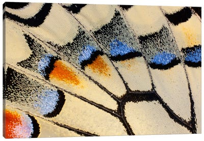 Butterfly Wing Macro-Photography XX Canvas Art Print