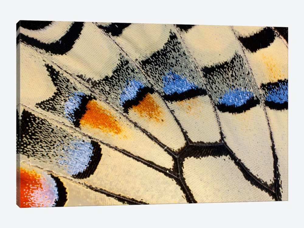 Butterfly Wing Macro-Photography XX by Darrell Gulin 1-piece Canvas Print