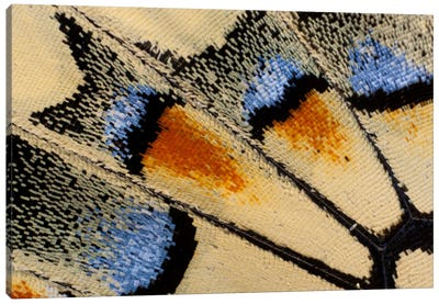 Butterfly Wing Macro-Photography XXI Canvas Art Print