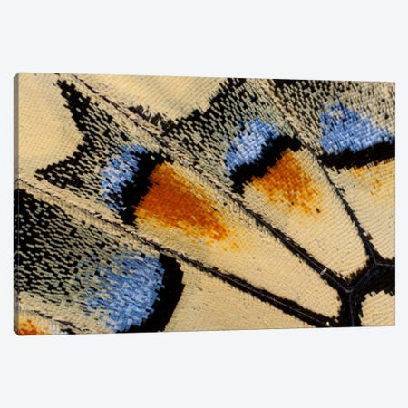 Butterfly Wing Macro-Photography XXI Canvas Print #DGU28} by Darrell Gulin Canvas Art Print