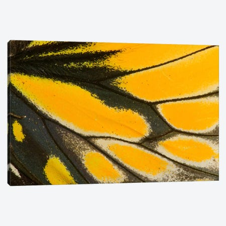 Butterfly Wing Macro-Photography XXII 3-Piece Canvas #DGU29} by Darrell Gulin Canvas Art Print