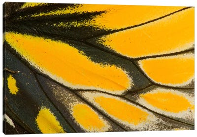 Butterfly Wing Macro-Photography XXII Canvas Art Print