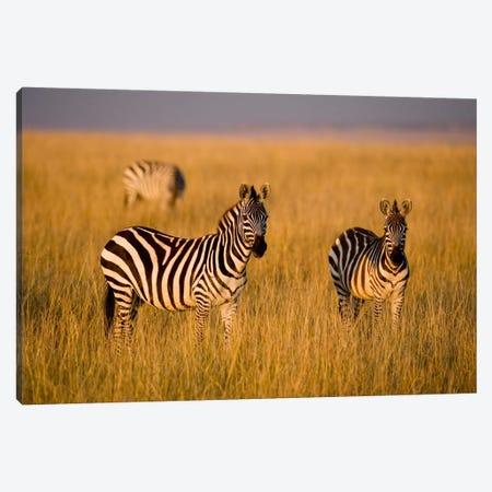 Plains Zebras, Maasai Mara National Reserve, Kenya 3-Piece Canvas #DGU2} by Darrell Gulin Canvas Art Print