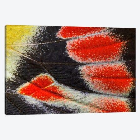 Butterfly Wing Macro-Photography XXIII Canvas Print #DGU30} by Darrell Gulin Canvas Wall Art