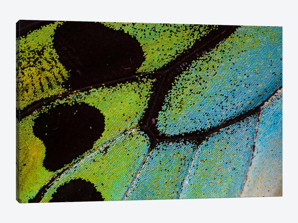 Butterfly Wing Macro-Photography XXV 1-piece Canvas Art Print