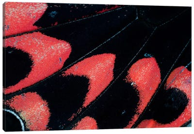 Butterfly Wing Macro-Photography XXVI Canvas Art Print
