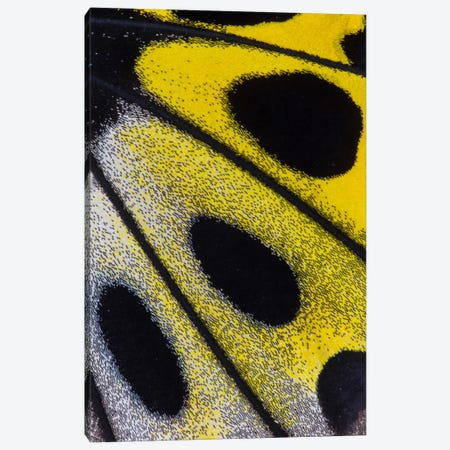 Butterfly Wing Macro-Photography XXVIII Canvas Print #DGU35} by Darrell Gulin Canvas Art Print