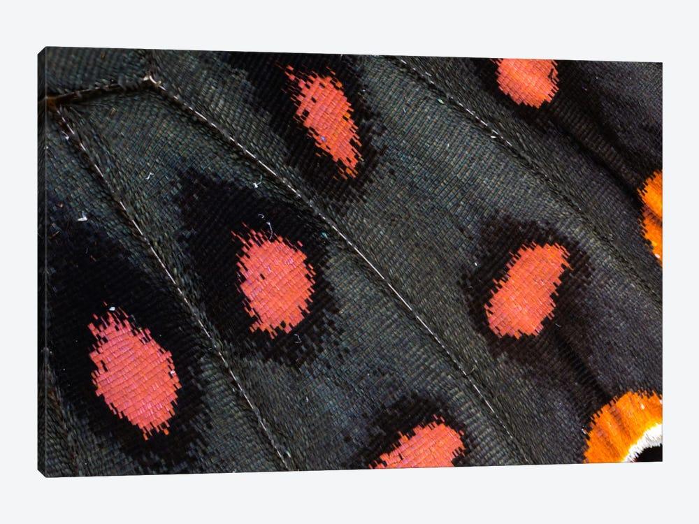 Butterfly Wing Macro-Photography XXIX by Darrell Gulin 1-piece Canvas Art Print