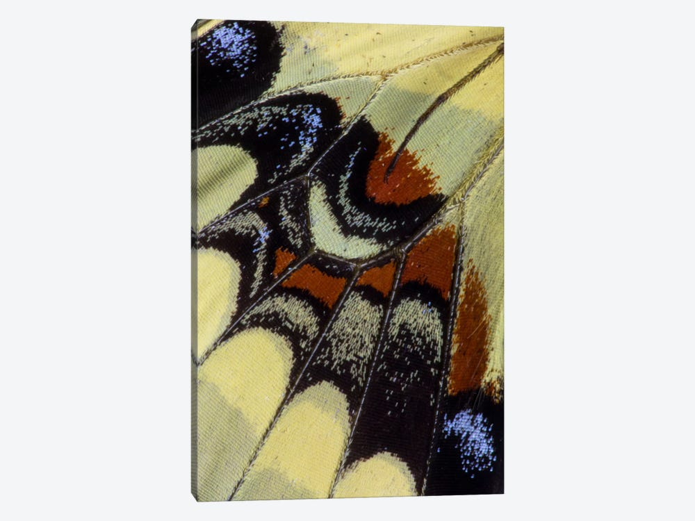Butterfly Wing Macro-Photography XXX by Darrell Gulin 1-piece Canvas Artwork
