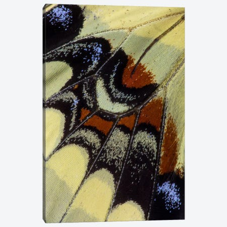 Butterfly Wing Macro-Photography XXX Canvas Print #DGU37} by Darrell Gulin Canvas Art Print